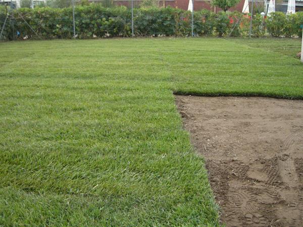 Prato pronto ostia manutenzione giardini roma for Prato pronto